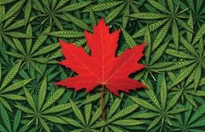 Canada_Marijuana_-_THINKSTOCK